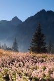 与用花装饰的草甸的山风景 库存照片