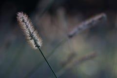 与由后面照的太阳的草 库存照片