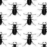 与甲虫的无缝的样式 免版税图库摄影