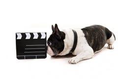 与电影拍手的狗 库存照片