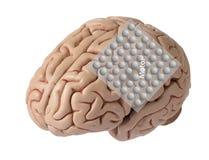与电极录音盖运动皮质的脑波图表的人脑模型  免版税库存照片