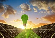 与电灯泡的太阳电池板在植物 库存照片
