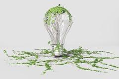 与电灯泡的绿色能量概念和绿色植物 库存照片
