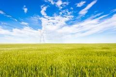 与电网杆的麦田 免版税库存图片