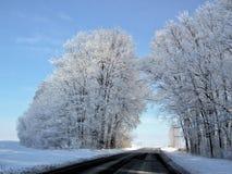 与白杨树的横向 库存图片