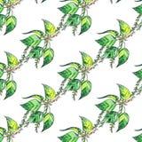 与白杨树绿色叶子的无缝的样式在白色背景 库存例证