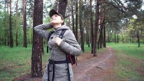 与白桦的美好的风景 桦树树丛 美好的全景 股票录像