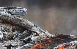 与白灰和红色火焰的灼烧的煤炭 库存照片