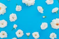 与白玫瑰的圆的花卉框架在蓝色背景开花 平的位置,顶视图 背景横幅开花表单少许桃红色螺旋 库存照片