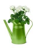 与白玫瑰的绿色减速火箭的喷壶 库存照片