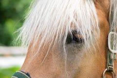 与白白金头发的白肤金发的马画象 免版税图库摄影