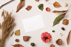 与白皮书卡片的秋天背景 免版税图库摄影