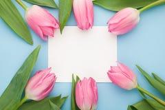 与白皮书名单的生日或婚礼大模型,桃红色郁金香在蓝色背景顶视图开花 美丽的妇女天卡片 平的l 免版税库存照片