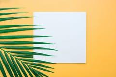 与白皮书插件边框的热带棕榈叶在淡色 免版税库存照片