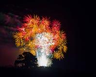 与白色、金子和红色大爆炸的树剪影 库存照片
