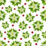 与白色一品红的圣诞节样式和霍莉叶子和误码率 皇族释放例证