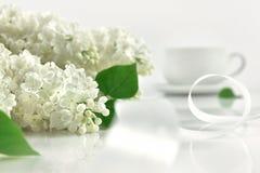 与白色丝带的白色丁香在早晨 免版税图库摄影