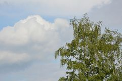 与白色云彩和桦树的天空蔚蓝 库存照片