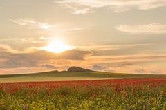 与白色云彩的美丽的日落天空在与鸦片的一个绿色夏天领域 库存照片
