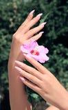 与白色修指甲的长的法国钉子在妇女的手上 免版税图库摄影