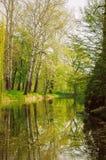 与白色吠声(白杨树)的树在湖增长 库存图片