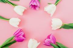 与白色和桃红色郁金香的花卉框架背景在淡色背景 平的位置,顶视图 妇女天背景 库存图片