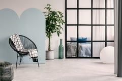 与白色和蓝色墙壁、绿色植物罐的和时髦椅子的时兴的客厅内部 库存图片