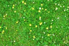 与白色和黄色花的绿草纹理 免版税库存图片