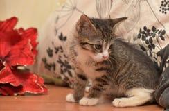 与白色小猫的镶边袜子在红色圣诞节旁边开花 免版税库存照片