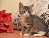 与白色小猫的镶边袜子在红色圣诞节旁边开花 库存图片