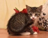 与白色小猫的镶边袜子在红色圣诞节旁边开花 免版税库存图片