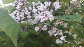 与白色小花的花卉木头 免版税库存照片