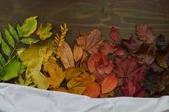 与白色布料片断的五颜六色的秋叶  库存照片