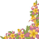 与白色开花的花的框架 免版税图库摄影