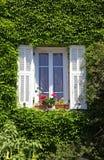 与白色快门和常春藤,普罗旺斯,法国的普罗旺斯窗口 免版税图库摄影