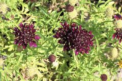 与白色斑点的大紫罗兰色花在瓣 免版税库存照片