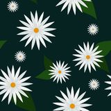 与白色春黄菊的无缝的传染媒介样式 库存例证