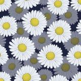 与白色春黄菊的无缝的样式在海军背景开花 库存例证