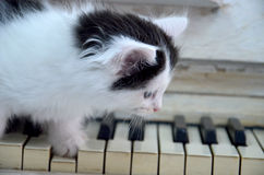 与白色条纹的黑小猫 免版税库存照片