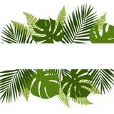 与白色横幅的热带叶子背景 棕榈,蕨, monsteras 免版税库存图片
