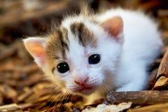 与白色毛皮的可爱的小的猫在谷仓 免版税库存图片