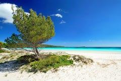 与白色沙子、沙丘、杉树和绿松石w的惊人的海滩 图库摄影