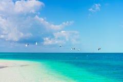 与白色沙子、绿松石海洋水和蓝天的田园诗热带海滩在加勒比岛上 免版税图库摄影