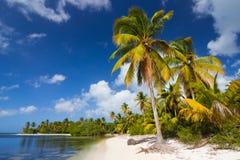 与白色沙子和棕榈树的热带狂放的海滩 免版税库存照片