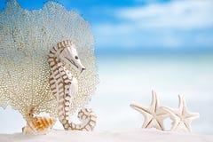 与白色海星的海象在白色沙子靠岸,海洋的天空 免版税库存照片