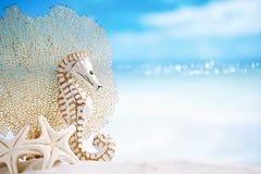 与白色海星的海象在白色沙子靠岸,海洋的天空 免版税库存图片