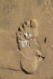 与白色海草的脚印在海滩 库存图片
