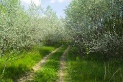 与白色灌木和道路的场面 库存照片