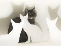 与白色猫形状和阴影的虎斑猫 图库摄影