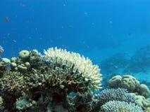 与白色石珊瑚的珊瑚礁和在热带海水下的异乎寻常的鱼 库存照片